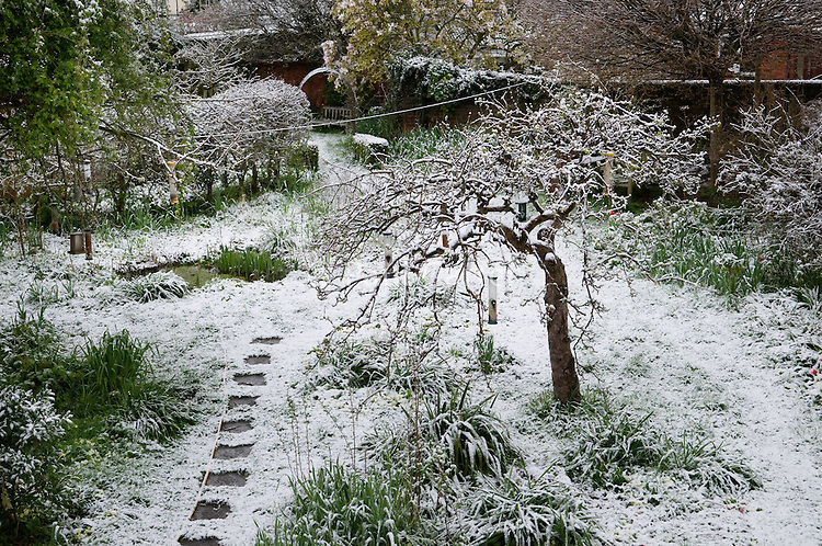 Looking out over a snow covered garden.