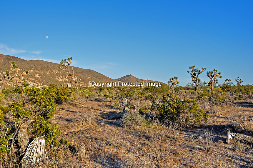 Nearing dusk in the Mohave Desert, Joshua Tree National Park, CA.
