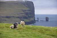 """Färöer, Färöer-Inseln, Färöer Inseln, """"Der Riese und das Trollweib"""", Risin und Kellingin, zwei große Steinsäulen etwa 2 km nördlich von Eiði vor der Nordküste Eysturoys, Basaltsäulen, Basaltsäule, Faroe, Faeroe Islands, sea stacks, """"The Giant and the Witch"""", Les Îles Féroé, Nordatlantik, Atlantik, Atlantischer Ozean, Schaf, Schafe, Färöer-Schaf, Färöer-Schafe,"""