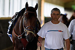 JUNE 5, 2015: American Pharoah, trained by Bob Baffert, walks in the barn before morning workouts in preparation for the 147th running of the Belmont Stakes at Belmont Park in New York, NY. Jon Durr/ESW/CSM