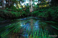 Image Ref: W014<br /> Location: Wandin<br /> Date: 22nd March 2014