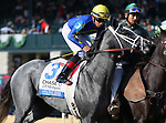 LEXINGTON, KY - October 11, 2017. #3 Stainless and jockey Manuel Franco before finishing 2nd in the JPMorgan Chase Jessamine Grade 3 $150,000 at Keeneland Race Course.  Lexington, Kentucky. (Photo by Candice Chavez/Eclipse Sportswire/Getty Images)