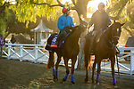 ARCADIA, CA  OCTOBER 30: Breeders' Cup Filly & Mare Turf entrant Fanny Logan, trained by John H.M. Gosden, heads back to the barn after her workout at Santa Anita Park in Arcadia, California on October 30, 2019.  (Photo by Casey Phillips/Eclipse Sportswire/CSM)