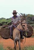 Bahia, Brazil. Old man wearing a trilby hat riding a mule with large wicker basket panniers; the mule is eating grass.