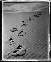 Europe/France/Aquitaine/33/Gironde/Bassin d'Arcachon: Traces sur la dune du Pilat