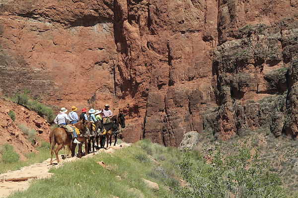 Cowboy leads tourists on mules up the Bright Angel Trail from Phantom Ranch to the South Rim, Grand Canyon National Park, Arizona. . John offers private photo tours in Grand Canyon National Park and throughout Arizona, Utah and Colorado. Year-round.
