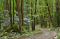 Winding road to Ramsey Cascade, Greenbrier
