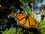 Santa Cruz, CA Wildlife Edit 1-11