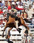 Cheyenne Frontier Days 2005