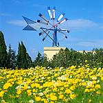 Spain, Balearic Islands, Mallorca: windmill with Spring Flowers | Spanien, Balearen, Mallorca: Windmuehle und Blumenwiese