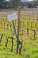 Sun bleached sign in the vineyard saying Rolle (Vermentino) Château Barbanau and Clos Val-Bruyere Cassis Cote d'Azur Var France