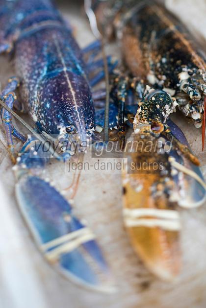 France, Pas-de-Calais (62), Boulogne-sur-Mer:  Homard,  Etal des pêcheurs au port de pêche, Vente directe // France, Pas de Calais, Boulogne sur Mer: Lobster, Stall fishermen at the fishing port, direct sales