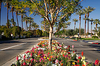 A flower lined street (Eldorado Drive) in Indian Wells, near Palm Springs, California