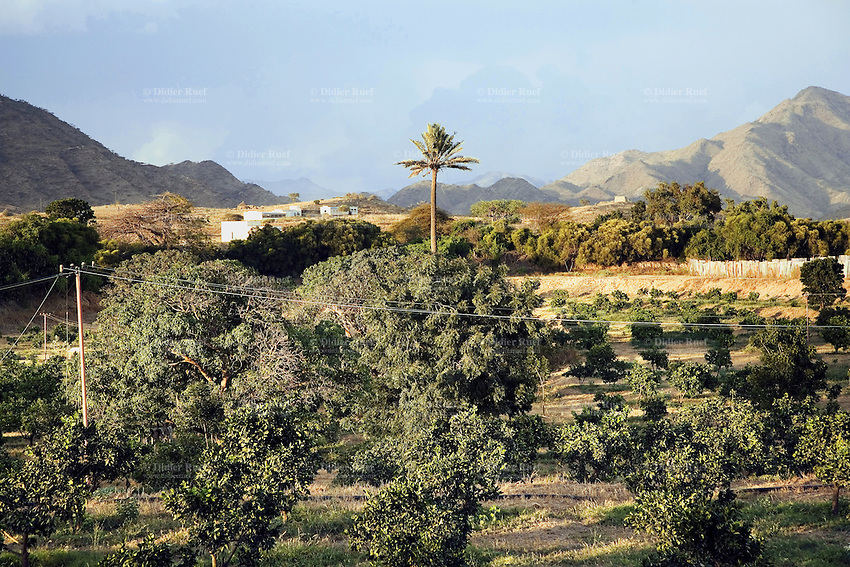 Eritrea. Anseba province. Keren. Palm tree. View on the green vegetation , the hills and the mountains around Keren. © 2006 Didier Ruef