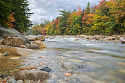 Fall foliage along the East Branch of the Pemigewasset River near the Lincoln Woods Trailhead in Lincoln, New Hampshire during the autumn months.