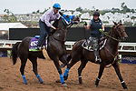 DEL MAR, CA - NOVEMBER 02: Blackjackcat, owned by Al Kirkwood & Saundra Kirkwood and trained by Mark Glatt, pulls back while moving down the track during morning workouts at Del Mar Thoroughbred Club on November 2, 2017 in Del Mar, California. (Photo by Michael McInally/Eclipse Sportswire/Breeders Cup)