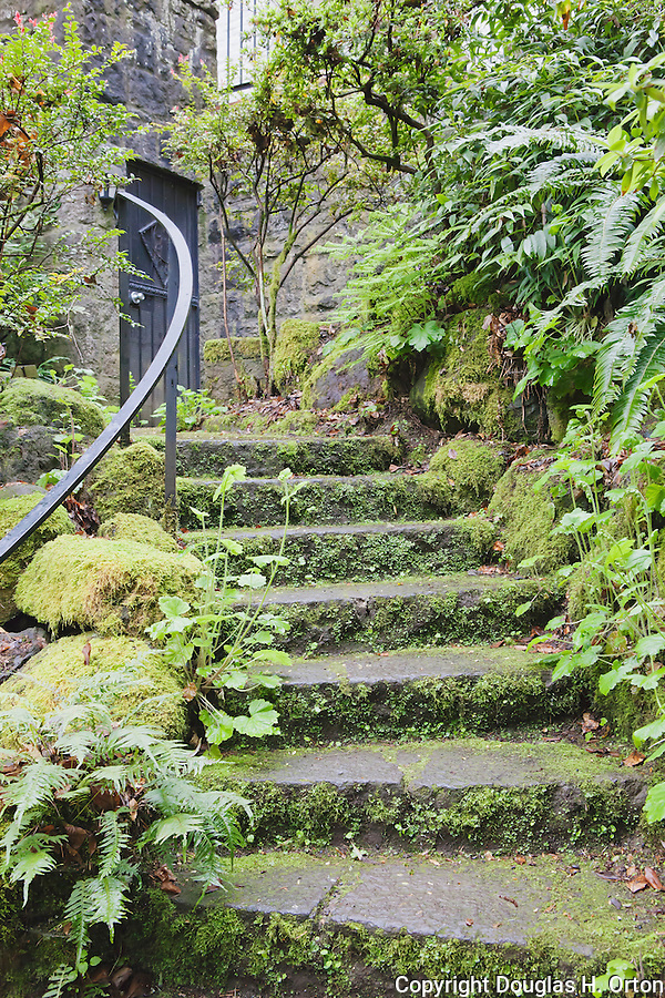 """Mossy Rock Stairway and stone wall lead to dungeon-like basement door of historic home.  """"Portland's Secret Garden"""",  Leach Garden was established by JOhn and Lilla Leach in the 1930's.  The Garden continues as a public place of respite and native northewest botanical display.  Operated by the city of Portland, Oregon.."""