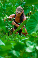 Woman tending taro plants in a lo'i (irrigated field for taro) in Hana, Maui