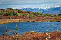 Kettle pond and the vibrant fall colors of the subarctic tundra with the Alaska Range in the background.