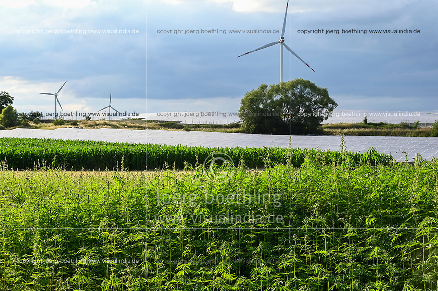 GERMANY, Luebz, field with fibre hemp, fibres are used for textiles, paper, seeds for oil , behind solar  and wind farm / DEUTSCHLAND, Lübz, Feld mit THC freiem Faserhanf, dahinter Solarfeld und Windkraft