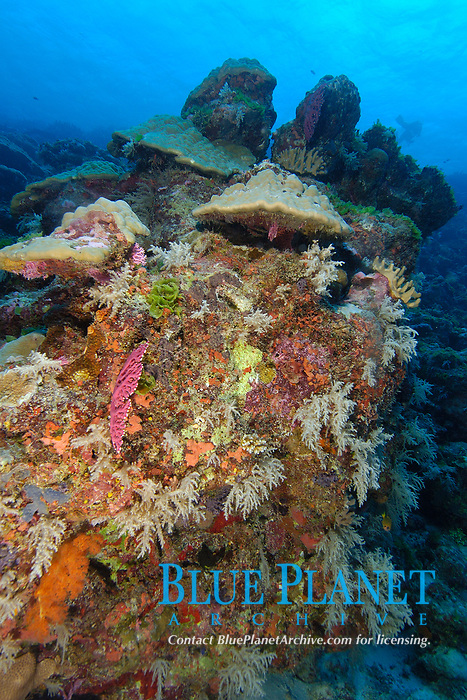 Highly diverse coral reef, Namu atoll, Marshall Islands, Micronesia, Pacific Ocean