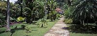 France/DOM/Martinique/Balata/Les jardins: Allée bordée de palmiers