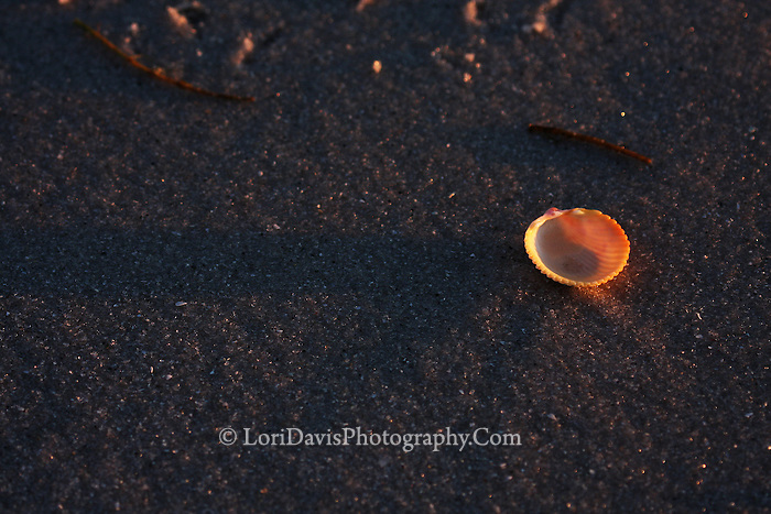 Shell On The Beach 4