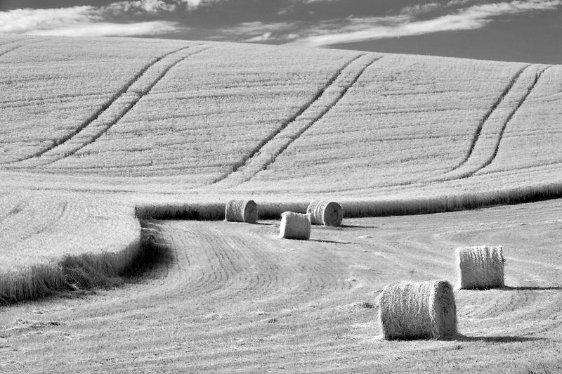 Bales of wheat straw. The Palouse. Washington.