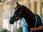 June 19, 2020: Belmont Stakes favorite Tiz The Law walks shed row after exercising as horses prepare for the Belmont Stakes at Belmont Park in Elmont, New York. Scott Serio/Eclipse Sportswire/CSM