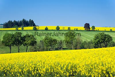 Germany, Free State of Thuringia, near Allersdorf (Herschdorf): yellow rape fields   Deutschland, Freistaat Thueringen, bei Allersdorf (Herschdorf): Rapsfelder