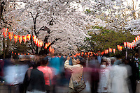 A Man taking photos of Cherry Blossom at Ueno Park in Tokyo, Japan
