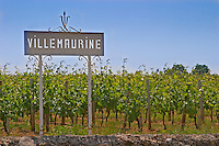 A white sign in the vineyard saying Chateau Villemaurine Saint Emilion Bordeaux Gironde Aquitaine France