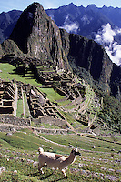 Machu Picchu, Peru - Eastern Urban Sector in foreground, Western Urban Sector in background, Huayna Picchu immediately behind city ruins.