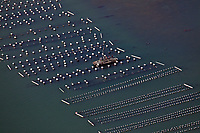aerial photograph of the Carlsbad Aquafarm oyster beds, Carlsbad, San Diego County, California