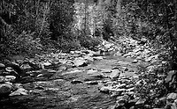 Black and white image of Big Creek Kootenai National Forest Montana