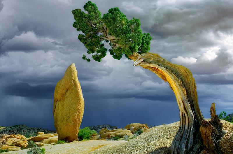 Rock pinnacle and thunderstorm framed by juniper tree. Joshua Tree National Park, California