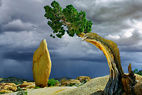 Rock pinnacle and thunderstorm framed by juniper tree. Joshua Tree National Park, California