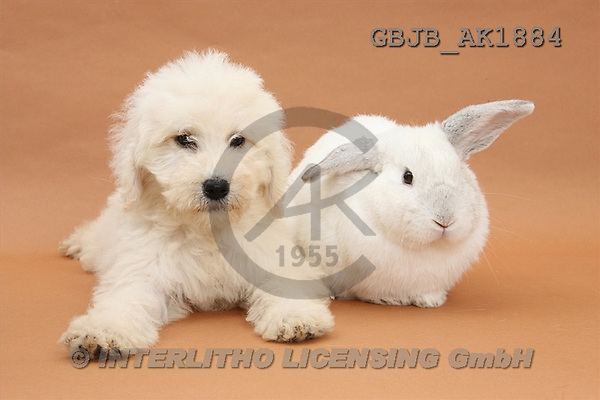 Kim, ANIMALS, fondless, photos(GBJBAK1884,#A#) Hunde, perros