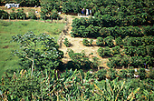 Sao Paulo State, Brazil. Coffee pickers working on a plantation.