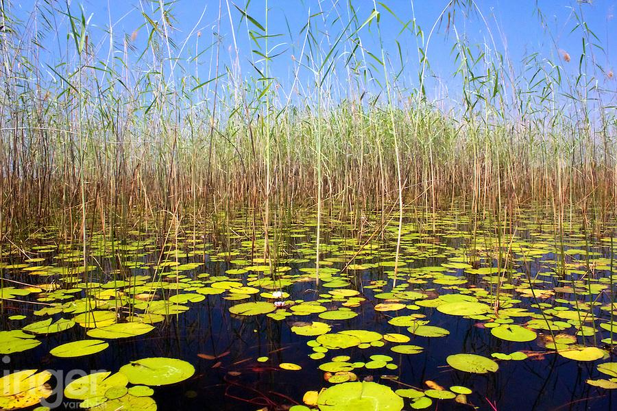 Swamps of the Okavango Delta, Botswana