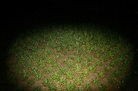 CHINA. Beijing. A patch of grass  . 2008