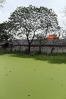 A polluted pond suffering from eutrophication, in a slum community in central Jakarta.<br /> <br /> To license this image, please contact the National Geographic Creative Collection:<br /> <br /> Image ID:1588089  <br />  <br /> Email: natgeocreative@ngs.org<br /> <br /> Telephone: 202 857 7537 / Toll Free 800 434 2244<br /> <br /> National Geographic Creative<br /> 1145 17th St NW, Washington DC 20036