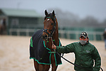 February 6, 2021: Mucho before the running of the King Cotton Stakes at Oaklawn Racing Casino Resort in Hot Springs, Arkansas on February 6, 2021. Justin Manning/Eclipse Sportswire/CSM