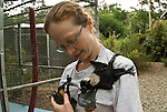 Ashleigh Johnson - a volunteer wildlife carer for the Tolga Bat Hospital caring for a Spartacus. A Spectacled Flying Fox orphan baby(Pteropus conspicillatus)