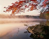 Foggy sunrise light on Crane Pond in the Pharoah Lake Wilderness; Adirondack Park & Preserve, NY