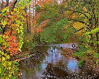 USA, New York, fall colors lining Brant Creek Warren County New York