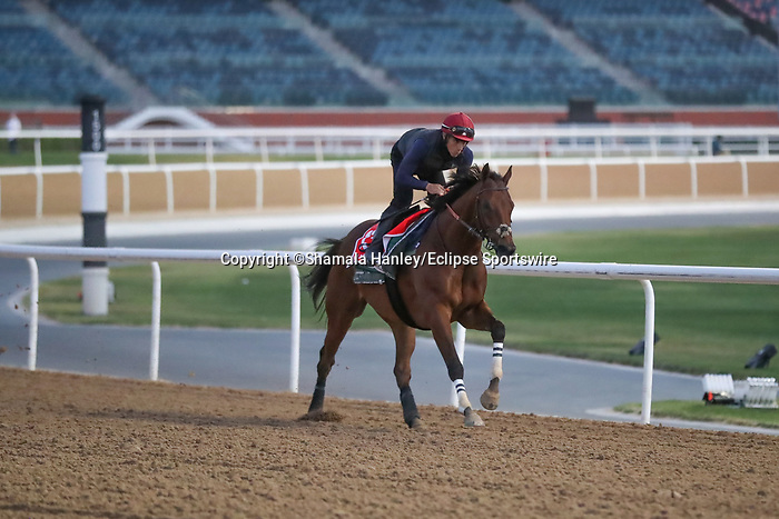 March 25, 2021: Dubai World Cup contender Military Law (GB) trains on the track for trainer Musabbeh Al Mheiri at Meydan Racecourse, Dubai, UAE. Shamela Hanley/Eclipse Sportswire/CSM