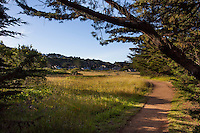 Coastal homes at The Sea Ranch, protected by hedgerows for privacy and wind protection