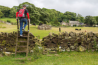 Northumberland, England, UK.  Hiker Traversing a Ladder Stile over a Farmer's fence on Hadrian's Wall Footpath.  Wall Remnant in Background.  MR