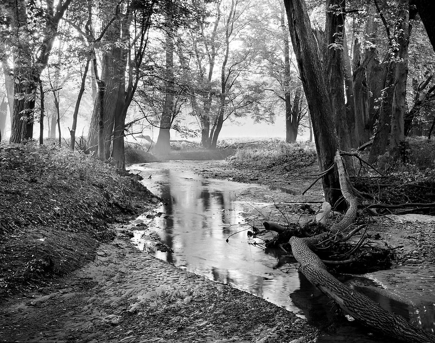 Wabash Bottoms Nature Preserve is a 75-acre property under the joint ownership of NICHES Land Trust & the Tippecanoe County Parks Dept.  This small tributary leads to the Wabash River corridor and is inviting to many life forms, especially on this tranquil foggy morning.